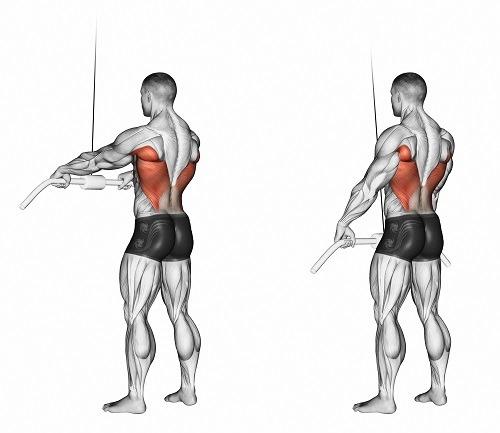 Tricep Series   Level 1 Bar Pull Downs at Cables   Elbows Locked in Extension - آموزش حرکات - زیر بغل سیمکش دست صاف